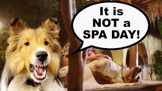'It is NOT a SPA DAY!'  A Biscuit 'Talky' (a Spay Day Talking Dog Adventure)