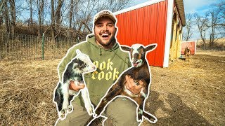 I Bought BABY GOATS for My BACKYARD FARM!!!