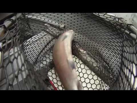 Eric Kiertzner Steelhead Fly Fishing Trinity River CA
