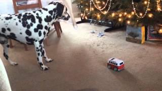 Dalmatian Attacks Vw Campervan Then Sneezes
