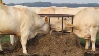 Vers l'autonomie alimentaire en systèmes herbager et fourrager