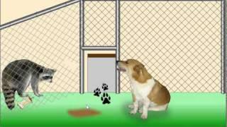 Animal Shelter Escape Walkthrough