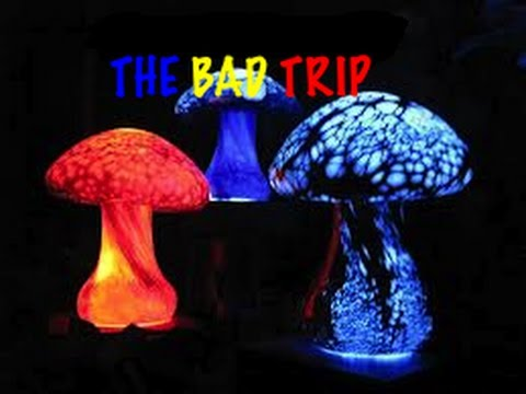 The Bad Trip (The Effects of Shrooms)