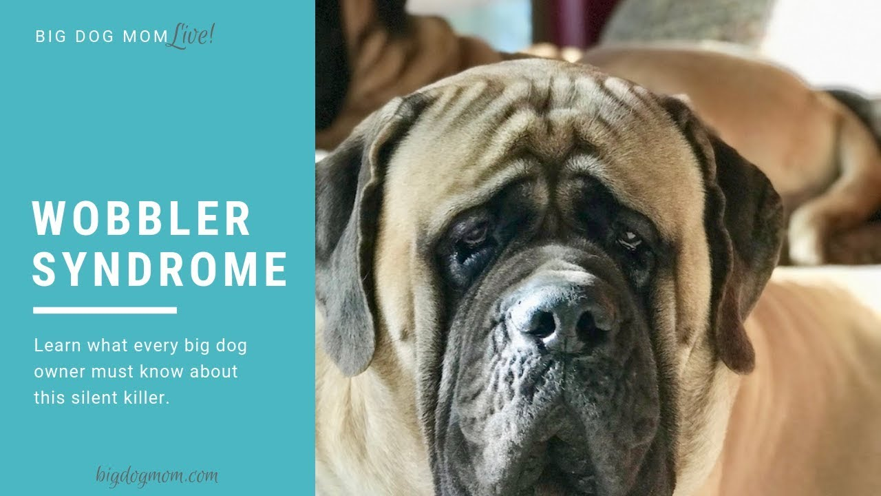 Wobbler Syndrome What Dog Owners Must Know About This Silent