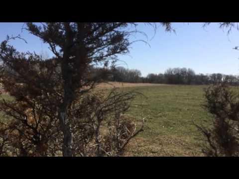 200 Yard Bow Belly Crawl On A Flock Of Eastern Turkeys In Isanti Minnesota