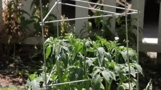 Can A Steel Post Be Used To Stake Tomato Plants? : Garden Space