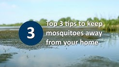 Top 3 tips to keep mosquitoes away from your home