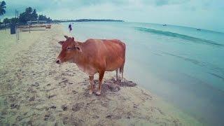 Best of Sri Lanka trip | June & July 2016