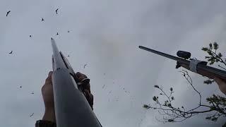 Охота на гуся с чучелами 2017 в Карелии