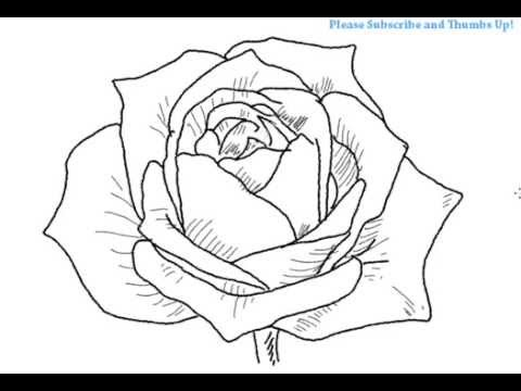 How to draw an open rose flower yzarts yzarts youtube
