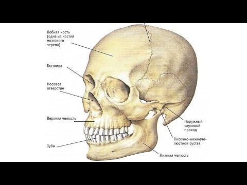 Зубы в верхней и нижней челюсти Хирургия и ортодонтия
