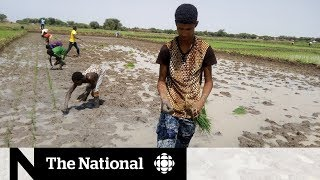 How do you feed a world dealing with climate change? | The Question