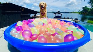DOG'S FIRST REACTION TO WATER BALLOONS!