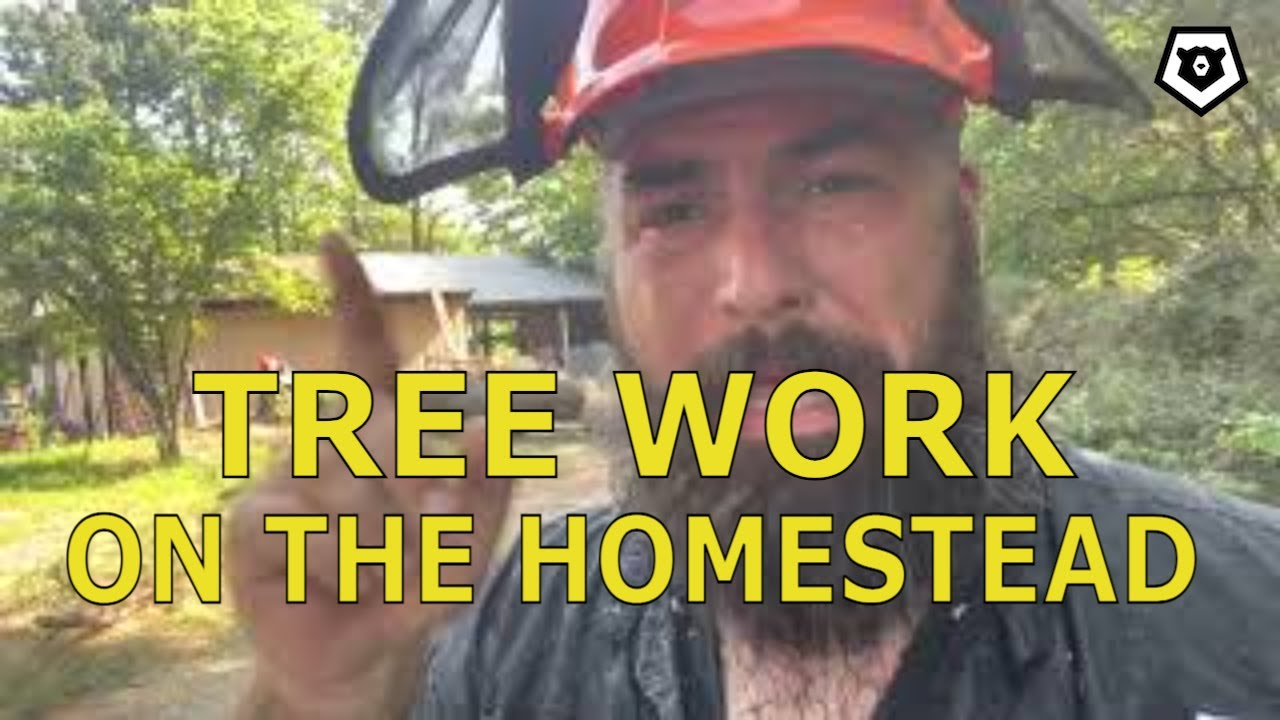 3 BIG Pines Removed! Tree Work on the Homestead