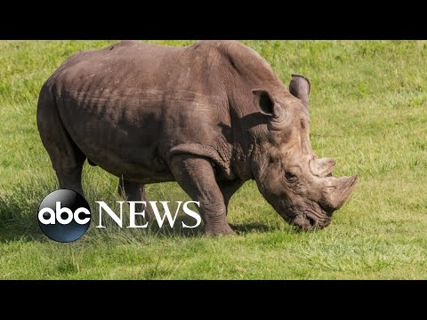 Zookeeper struck in stomach by rhino