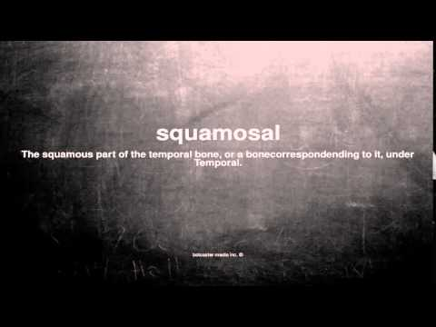 What does squamosal mean