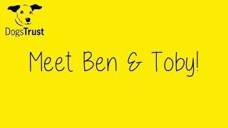 Dogstrust Glasgow - Ben & Toby