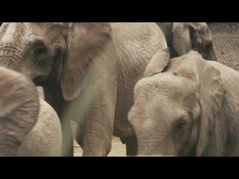 Omaha's Henry Doorly Zoo & Aquarium Through My Eyes - Travel Guide