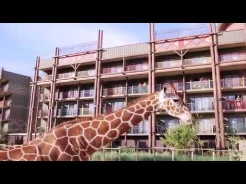 Disney's Animal Kingdom Lodge at Walt Disney World