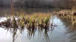 Nature #1 - Chant des crapauds - Soft spoken - ASMR FR