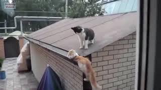 Funny Cat Jump Fail 2016