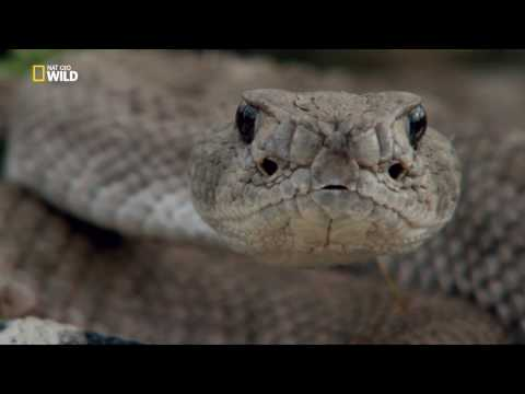 Королевы гадюк / Viper Queens (2016 — HDTV 1080p)
