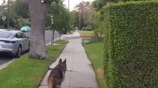 「あれ、ご主人どこ行ったの?ねえ、どこどこ?」散歩の途中で飼い主が消えちゃって焦る犬