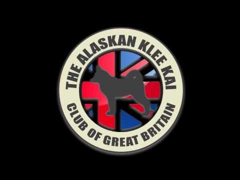 AKKCGB Alaskan Klee Kai Club of Great Britain ( AKK UK )