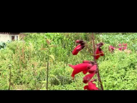 Bush of Red Lilium