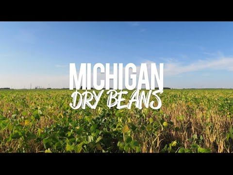 Michigan Dry Beans 2016