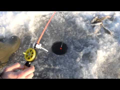 ловля угря в псковских озерах