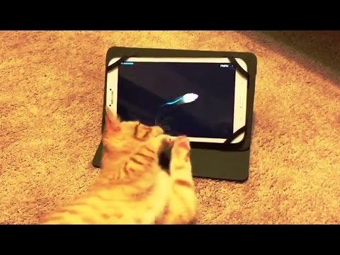 Kittens Playing with Tablets Compilation