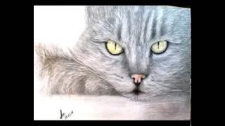 мои рисунки котят