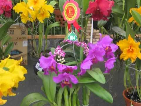 Thi hoa lan ở Rạch Gầm xoài mút Tiền Giang