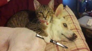 ПРИКОЛЫ С ЖИВОТНЫМИ Смешные Животные Собаки Смешные Коты Приколы с котами Забавные Животные 88