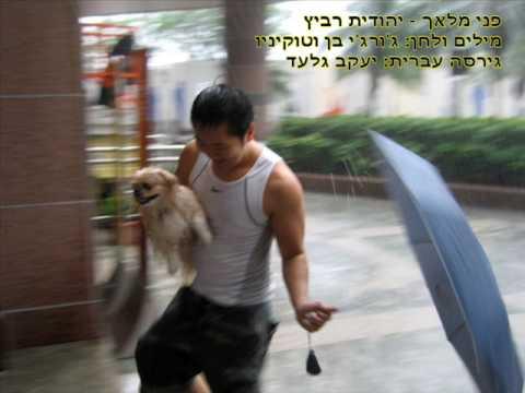 יהודית רביץ - פני מלאך // Yehudit Ravitz - Pnei Malach