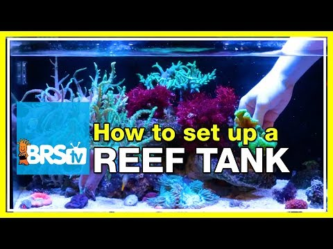 Starting a 20 gallon nano reef tank #fusion20