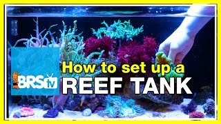 How to start a 20 gallon nano reef tank #fusion20 | Innovative Marine Nuvo 20
