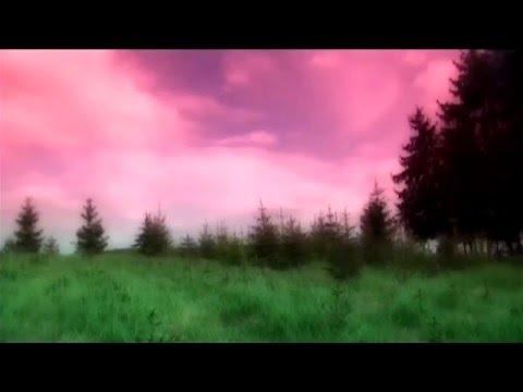 Pépe - Populus Dub