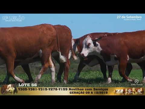 LOTE 066