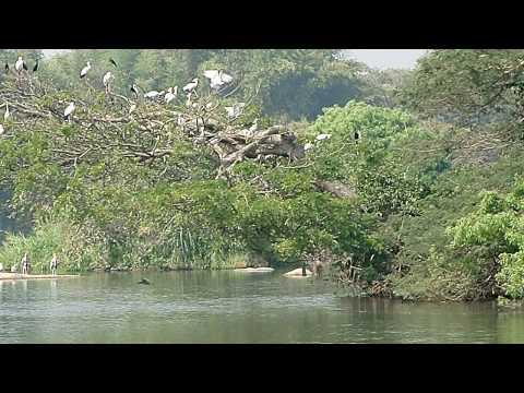 Ranganathittu Bird Sanctuary near Mysore (Karnataka, India)