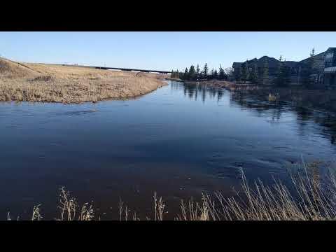 Spring Runoff of Blackmud Creek Edmonton 2018