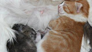 Котята зевают во сне
