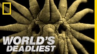 Is This the World's Weirdest-Looking Killer? | World's Deadliest