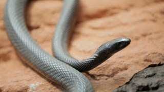 Download Why Do Venomous Animals Live In Warm Climates? Mp3 and Videos