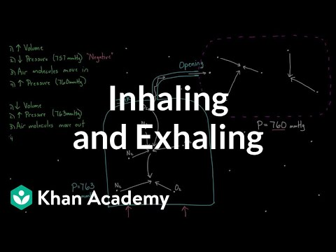 Inhaling and exhaling | Respiratory system physiology | NCLEX-RN | Khan Academy