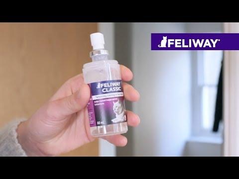 Como usar FELIWAY CLASSIC Spray