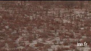Botswana : paysage aride