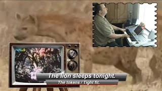 The lion sleeps tonight - The Tokens / Tight Fit. Played on Tyros 4 keyboard.