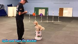 Nikkey the Havanese Dog Rockin his Tricks with Ron